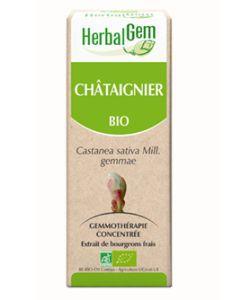 Châtaignier (Castanea vesca) bourgeon BIO, 50ml