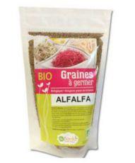 Graines à germer - Alfalfa