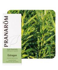 Estragon (Artemisia dracunculus)
