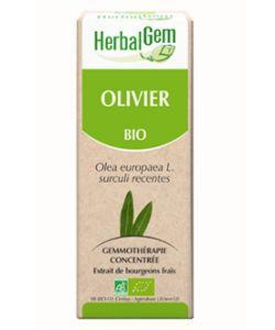 Olivier (Olea europea) j.p. BIO, 50ml