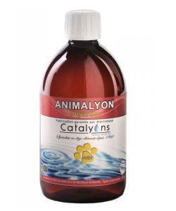 Animalyon - Digestion