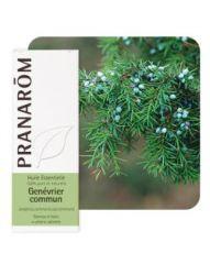 Genévrier commun (Juniperus communis)