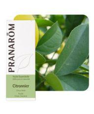 Citronnier feuille (Citrus limon)